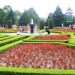 Pertimbangan yang Harus Anda Pikirkan Sebelum Menjadi Tukang Taman Jakarta